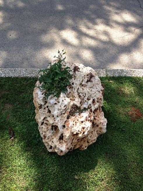 צילום של סלע שממנו צומח פרח וברקע רואים את הצל שהעץ ממול מטיל על המדרכה