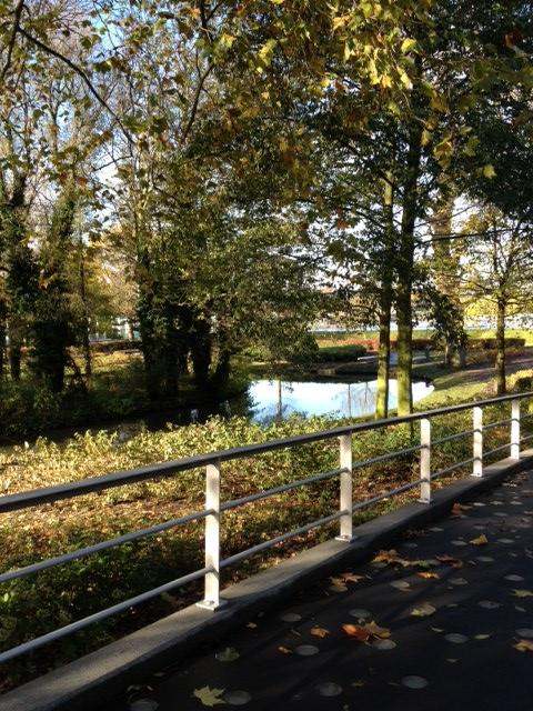 גשר, עצים ושלכת