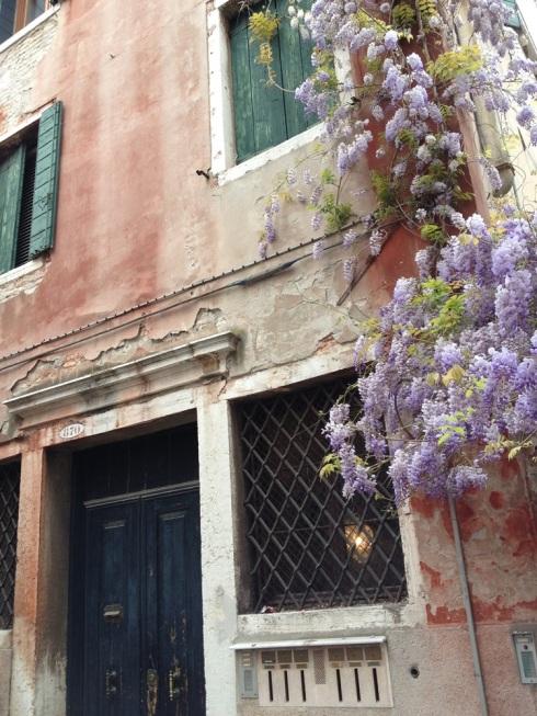 הויסטריה על קיר של בית בונציה